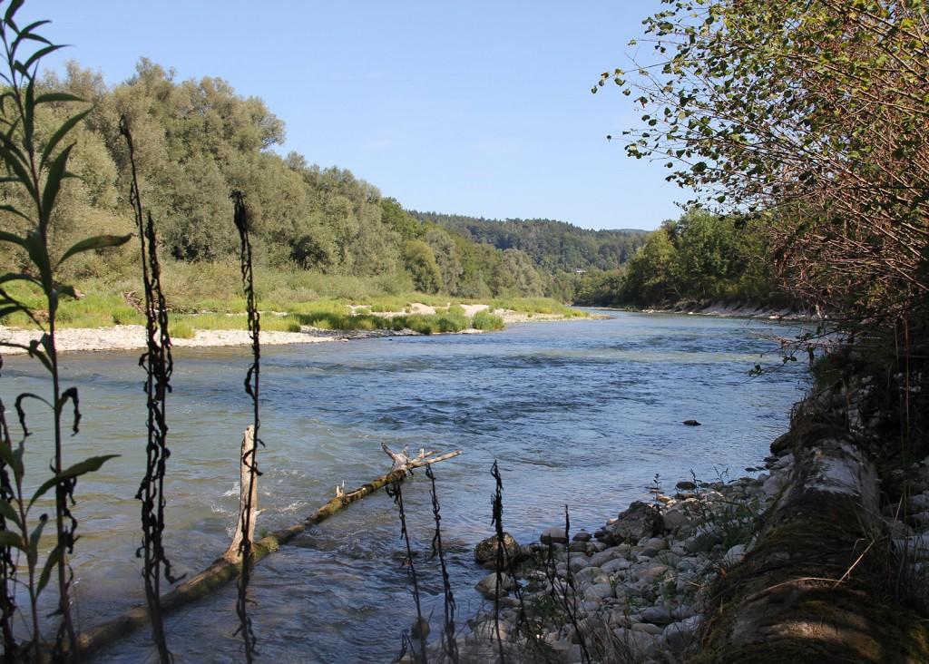 wöschnauer-rank_restwasserstrecke_alte-aare2