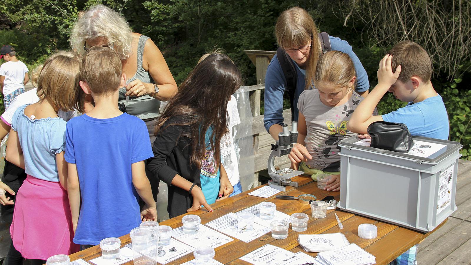 Schülerinnen beim Bestimmen von wirbellosen Kleinlebewesen