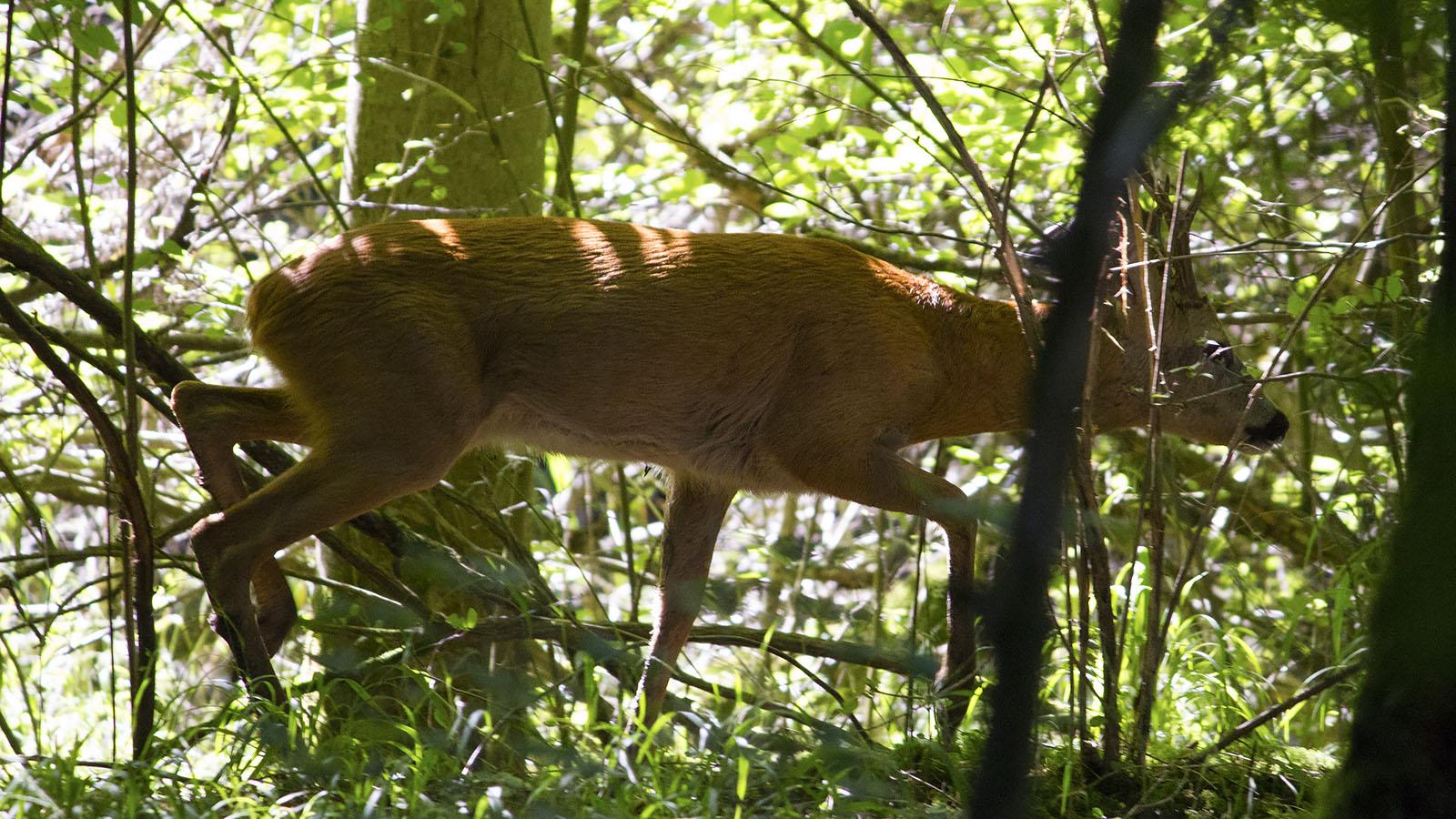 Seit einiger Zeit leben auf dem Gelände Rehe. Mit etwas Glück (und Vorsicht) können die Tiere auch am Tag beobachtet werden