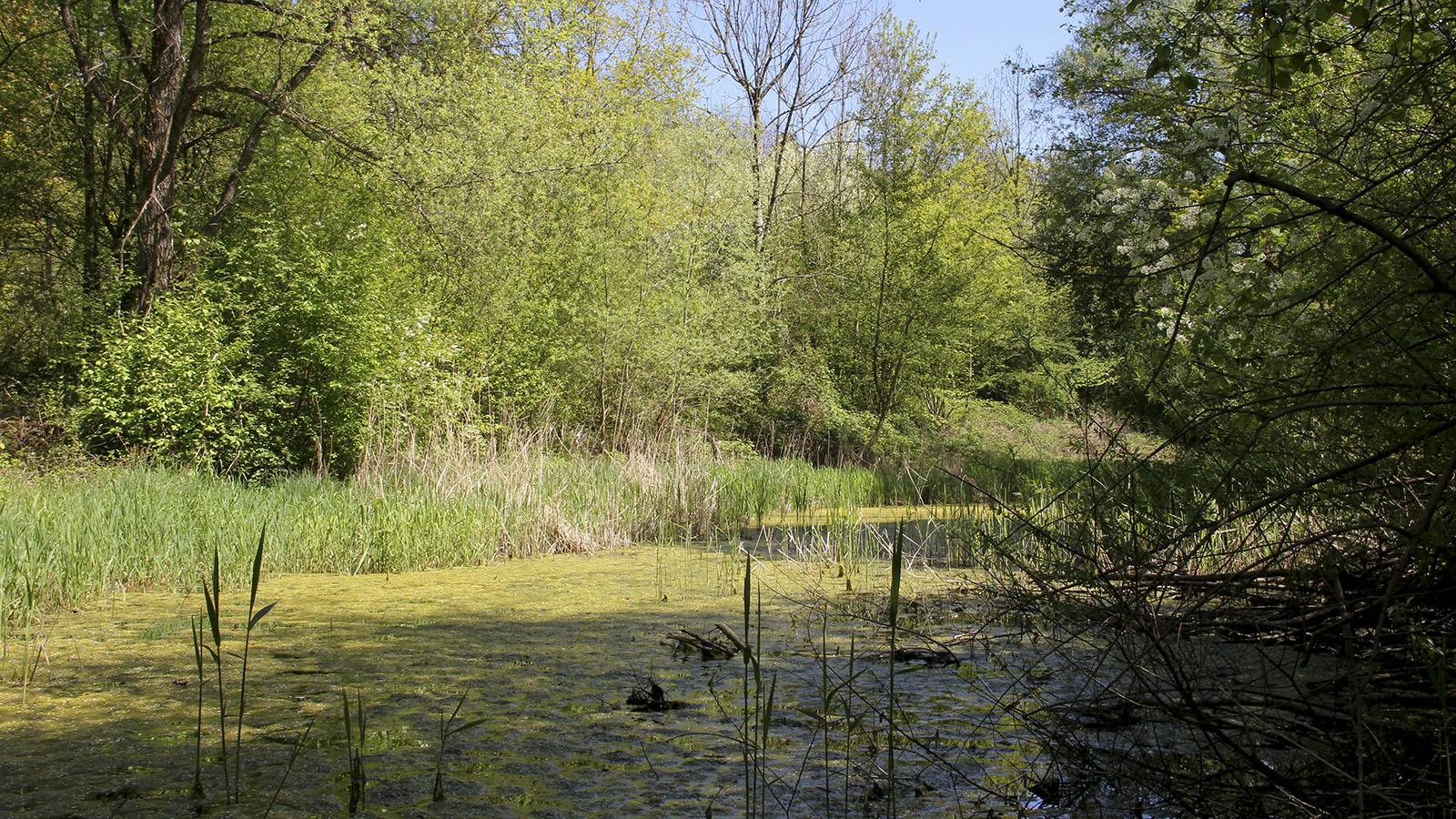 Auf dem Gelände kommen rund zweihundert verschiedene Pflanzenarten vor