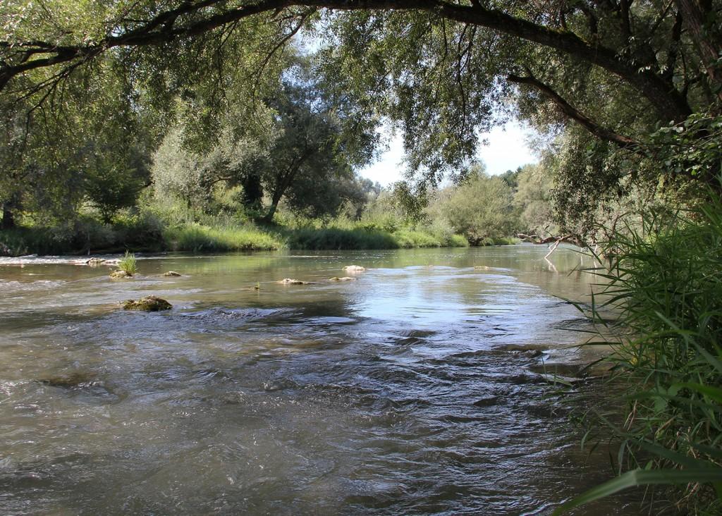 gösger-schachen_alte-aare_restwasserstrecke