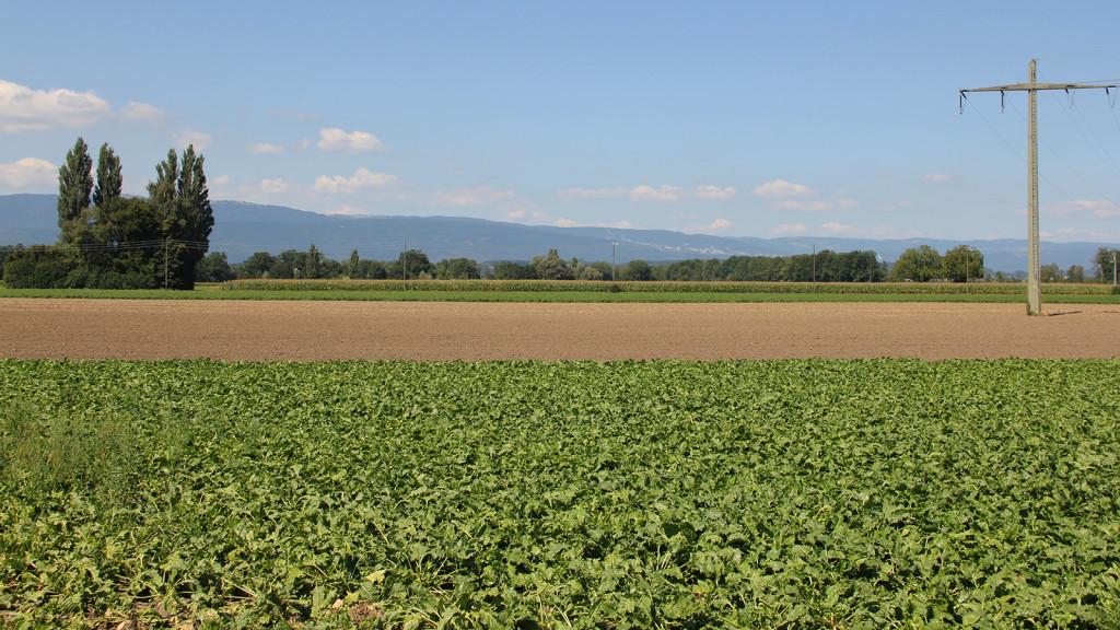 grosses-moss_kallnach_landwirtschaft_jura