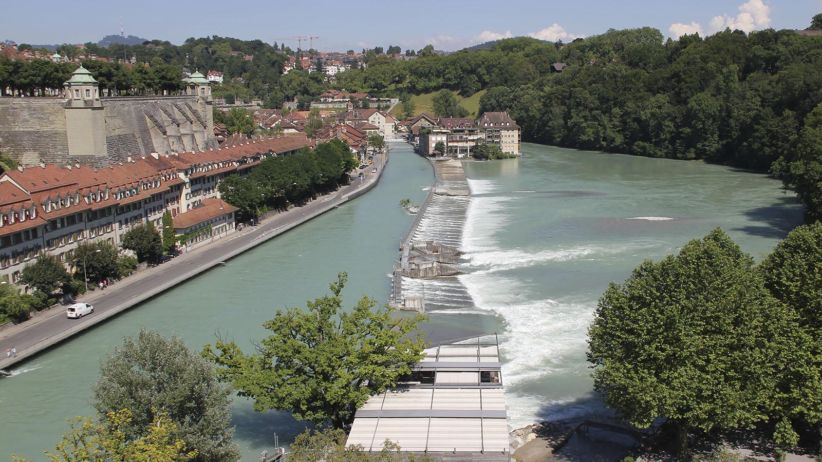 aare_mattenschwelle_hochwasser-2014_baum