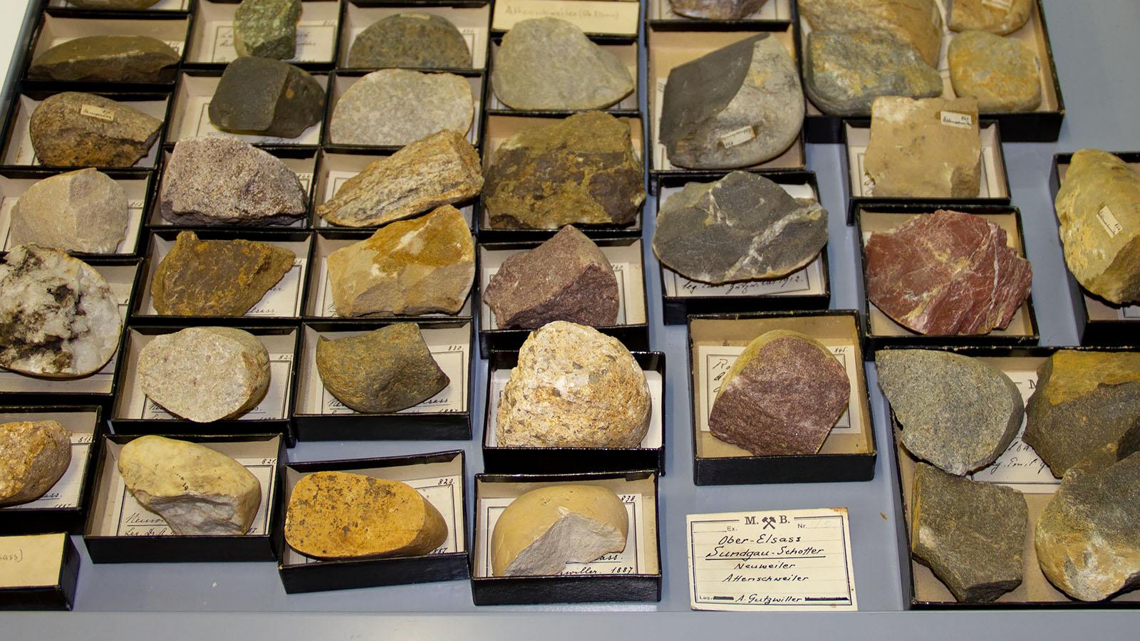 """Urzeitliche Flusskiesel aus dem Aare-Doubs, die vor 3 - 4 Millionen Jahren im Sundgau abgelagert wurden. Die abgebildeten """"Sundgauschotter"""" gehören zur Sammlung des naturhistorischen Museums Basel"""