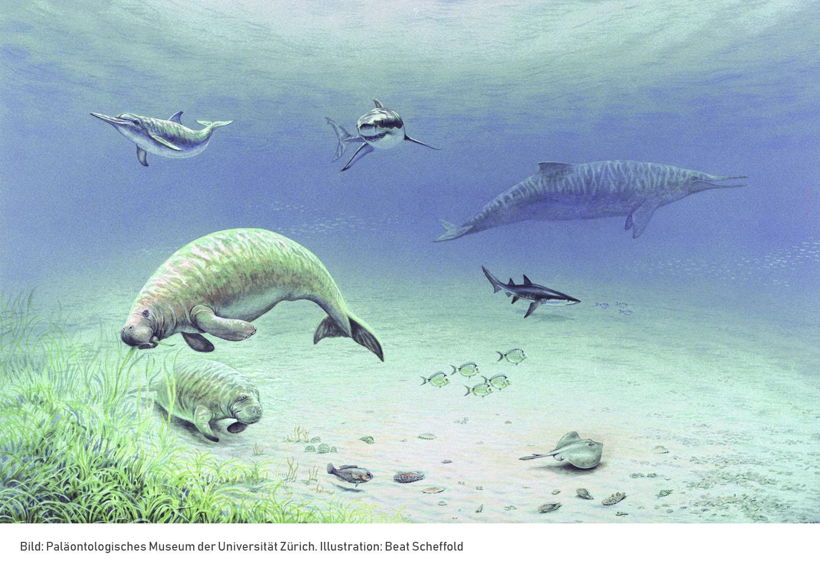 lebenswelt-obere-meeresmolasse_beat-scheffold_paläontologisches-museum-zürich