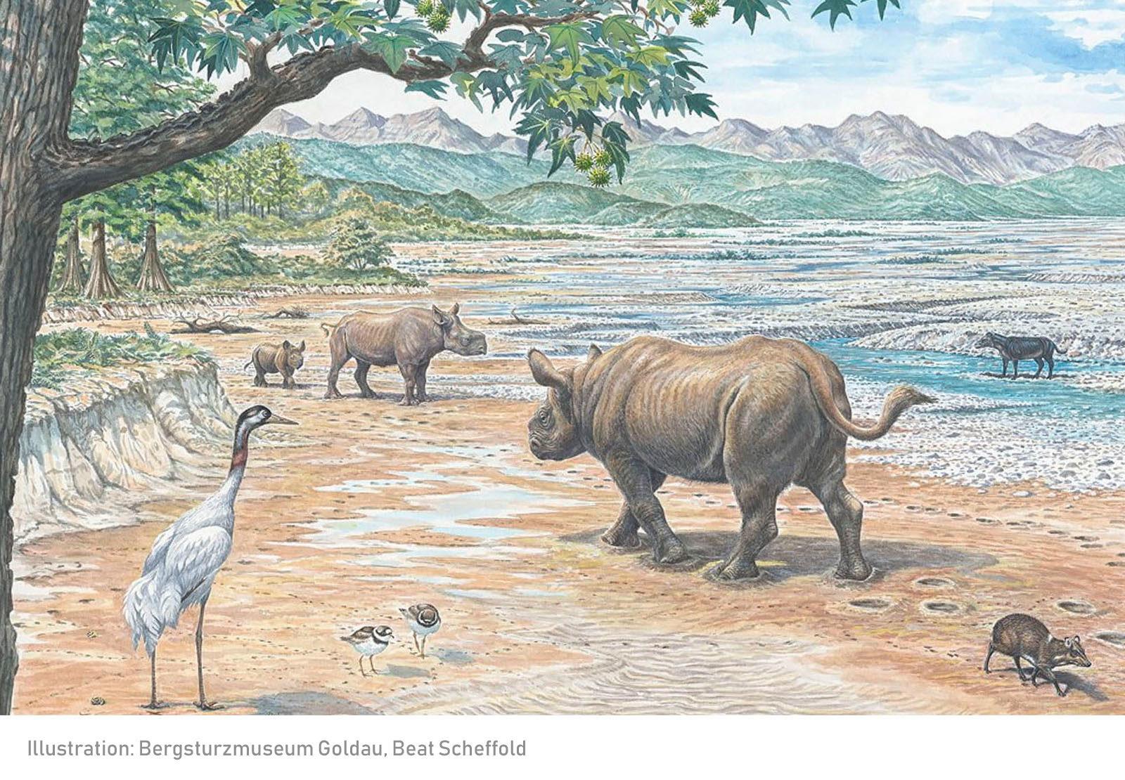 Oligozäne Lebenswelt bei Arth Goldau vor 25 Millionen Jahren