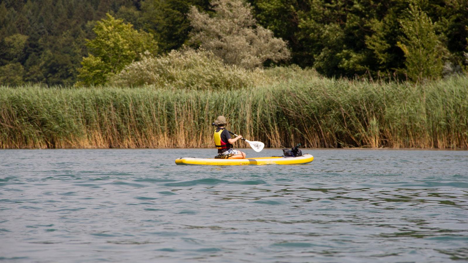 In den Schilfgürteln entlang des Wohlensees nisten unzählige Wasservögel. Um Stress für die Tiere möglichst zu vermeiden, muss ein Abstand von 25 Meter zum Ufer eingehalten werden